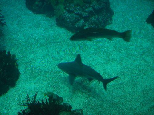 Lisbonne Parc des Nations Aquarium