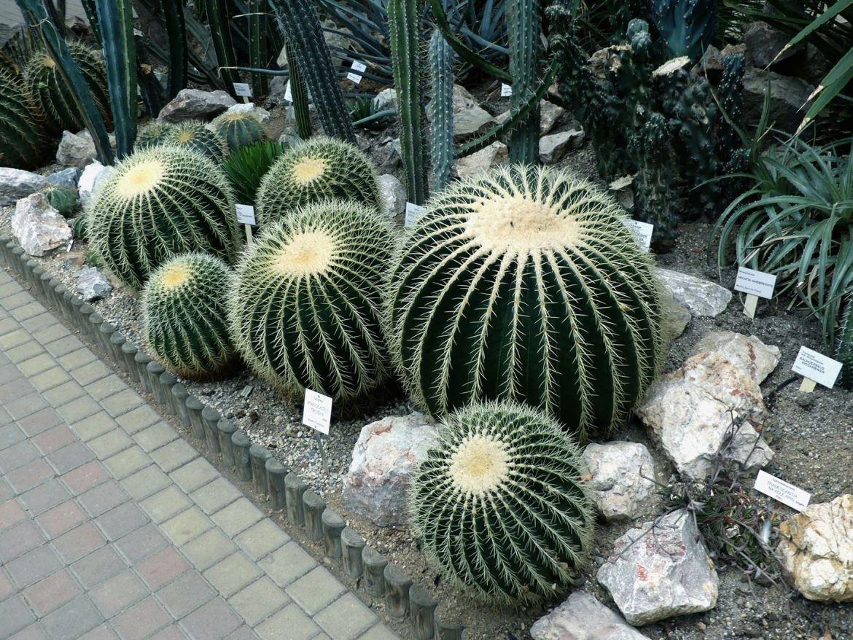 Prague Jardin botanique Claironyva