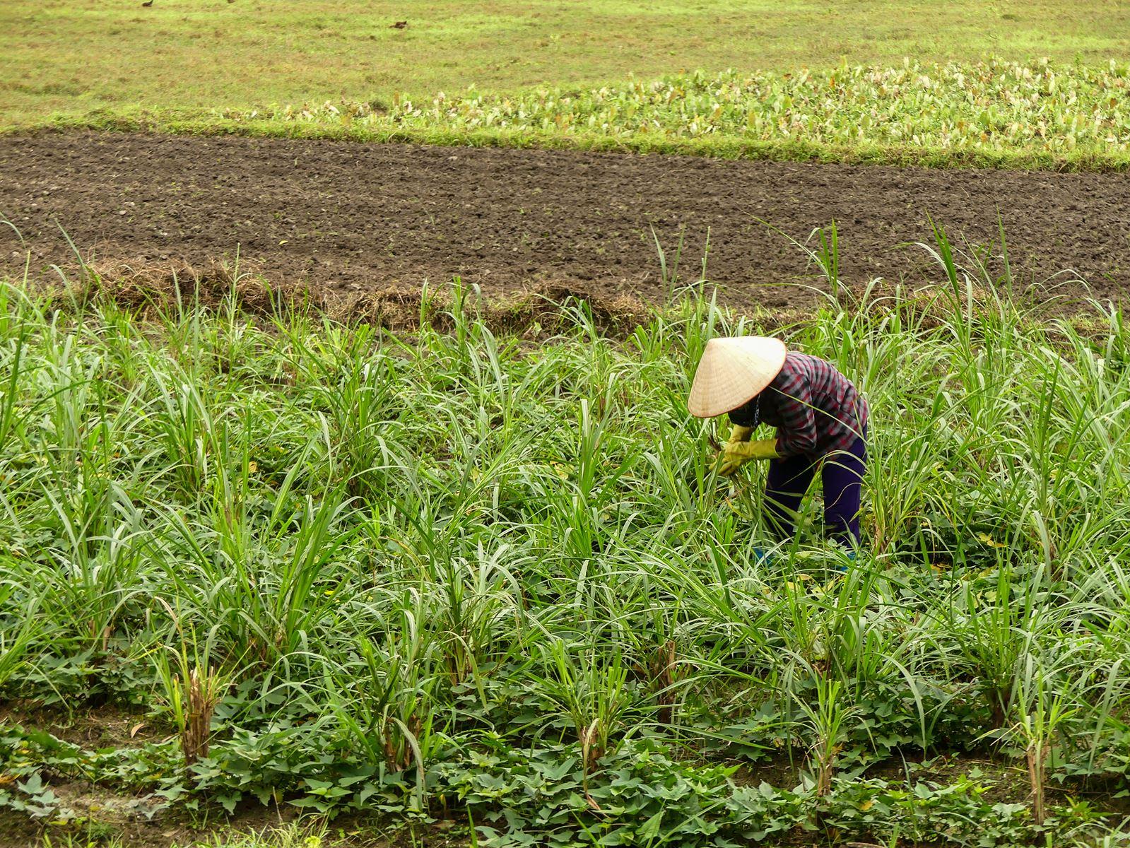 Claironyva Baie Lan Ha journée trek Vietnam