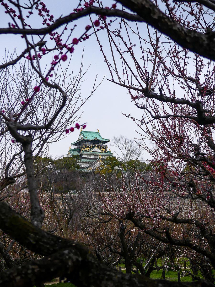 Osaka - Chateau d'Osaka