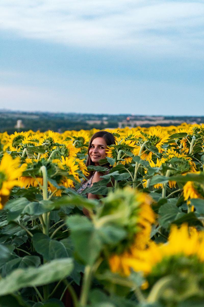 Sunset tournesols - Claironyva