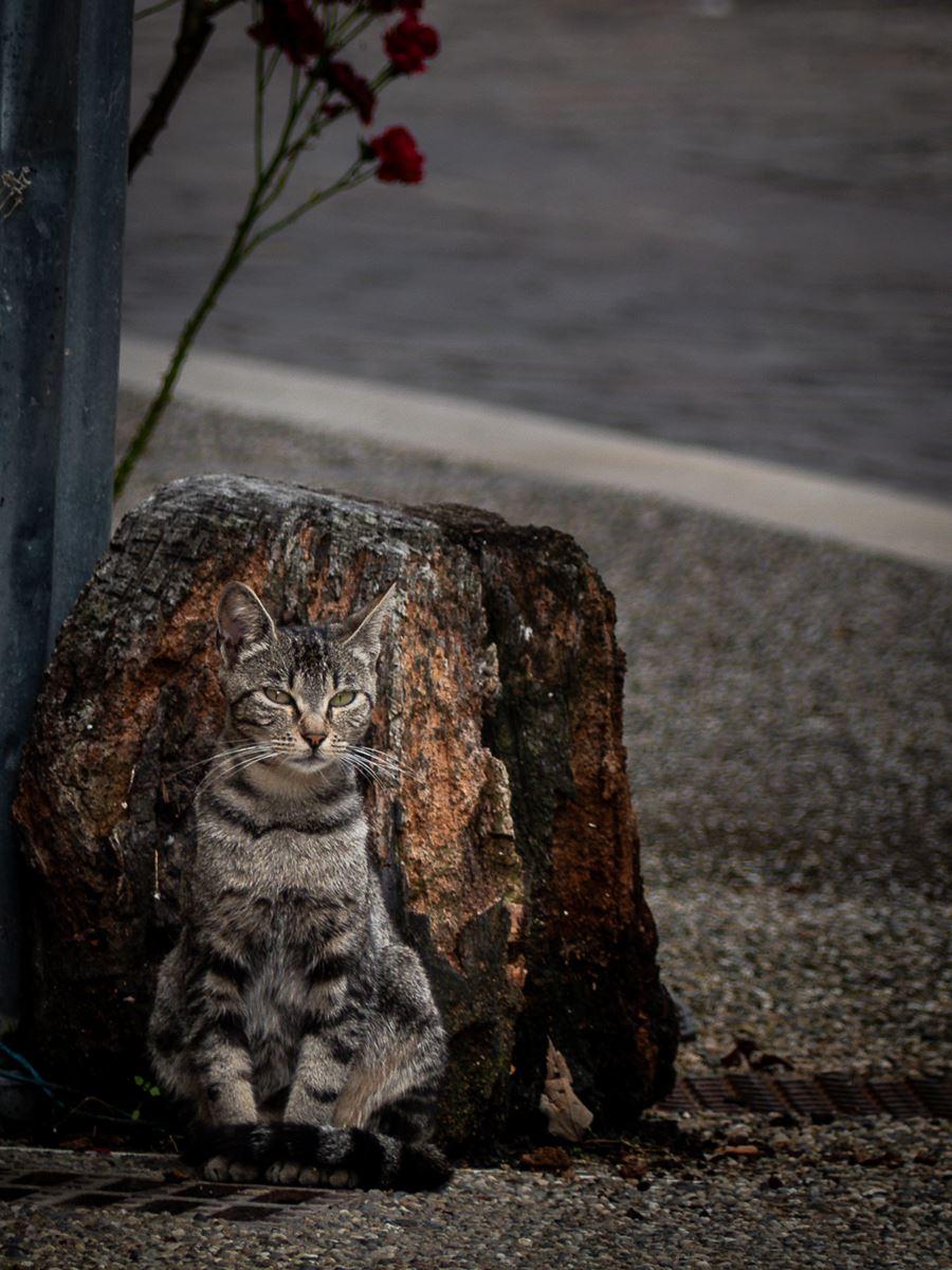 Un chat de Lauzerte