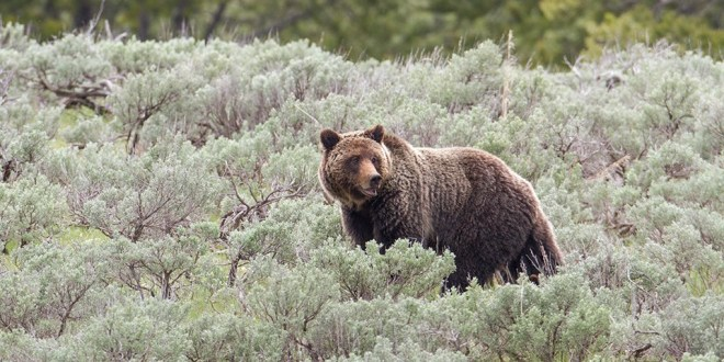 What Does it Mean When You See a Bear?
