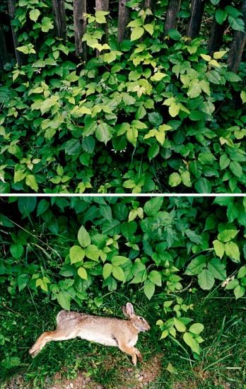 Jesse Burke, Poison Ivy