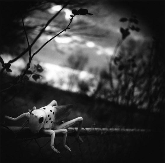Dave Anderson, Hopper