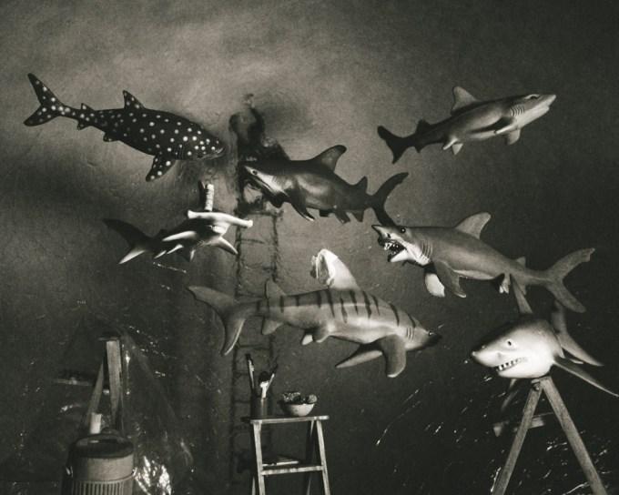 Lori Nix, Sharks