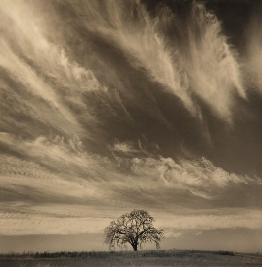 Rick Chapman, Oak With Clouds, California