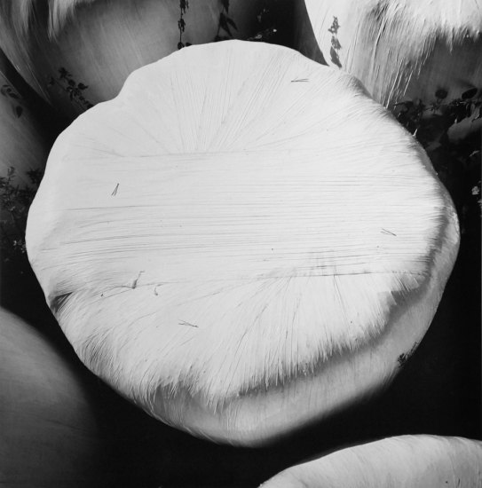 Rick Chapman, Whitewrap with Needles, Czech-Republic