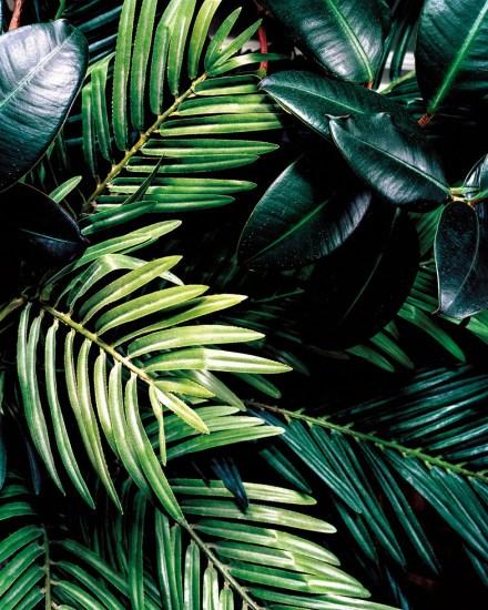 Nicole Schwartz, Untitled (Plant)