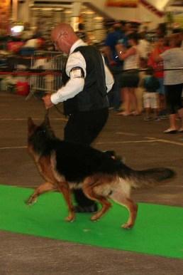 Présentation de Jersey du Clan des Gladiateurs lors de l'Exposition Internationale Canine de Dijon - Septembre 2016.