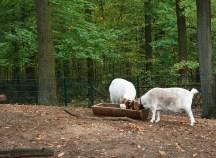 montessori-grundschule-hangelsberg_tag-der-offenen-tuer-2016_4