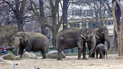 1803 Elefanten 59 600
