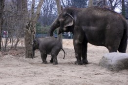 1803 Elefanten 63 600