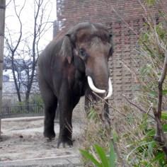 1803 Elefanten 69 600