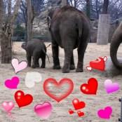 1803 Elefanten mit Herz