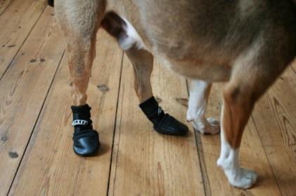 Schuh-Hund