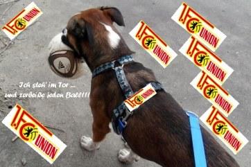 Unions-Hund