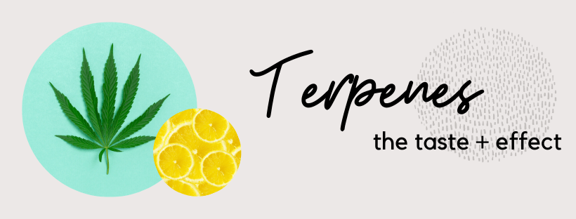 Cannabis terpenes and how they are responsible for the effects and taste of CBD hemp flower.