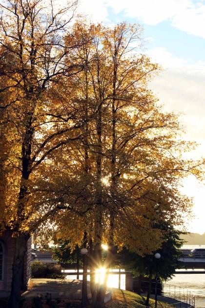 IMG_2686-autumn