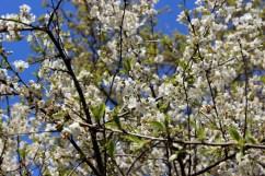 IMG_0574_blossom