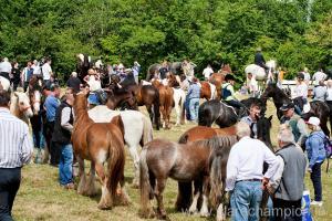 A busy scene at the Fair of Spancilhill. Photograph by Arthur Ellis