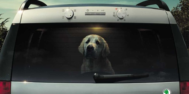 Never leave your dog in a car in hot weather.