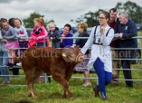 Aisling Burke leads out her calf at Kildysart Show. Photograph by John Kelly
