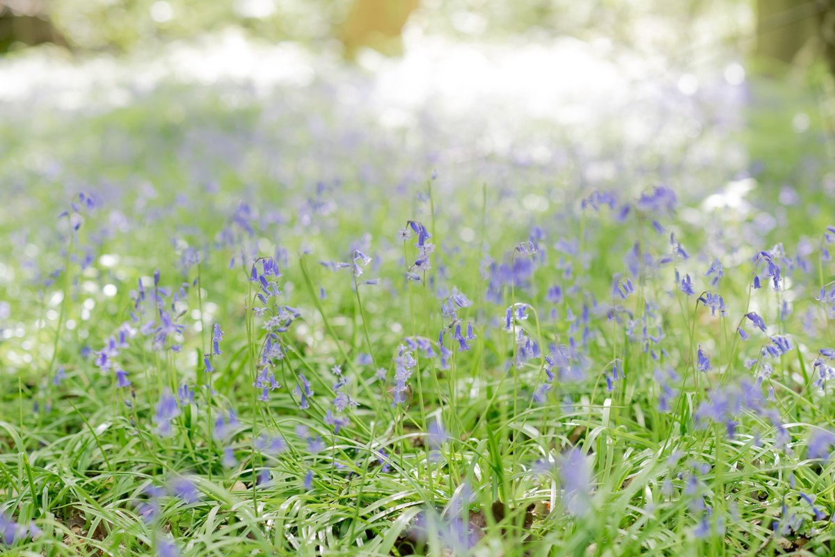 The best places to take bluebell photos in Surrey