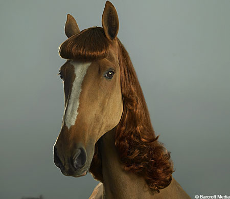 horseextensions2