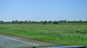Green grass - wow