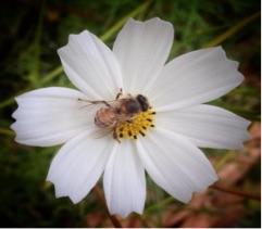 Bee in Clarens - Bear Hansen