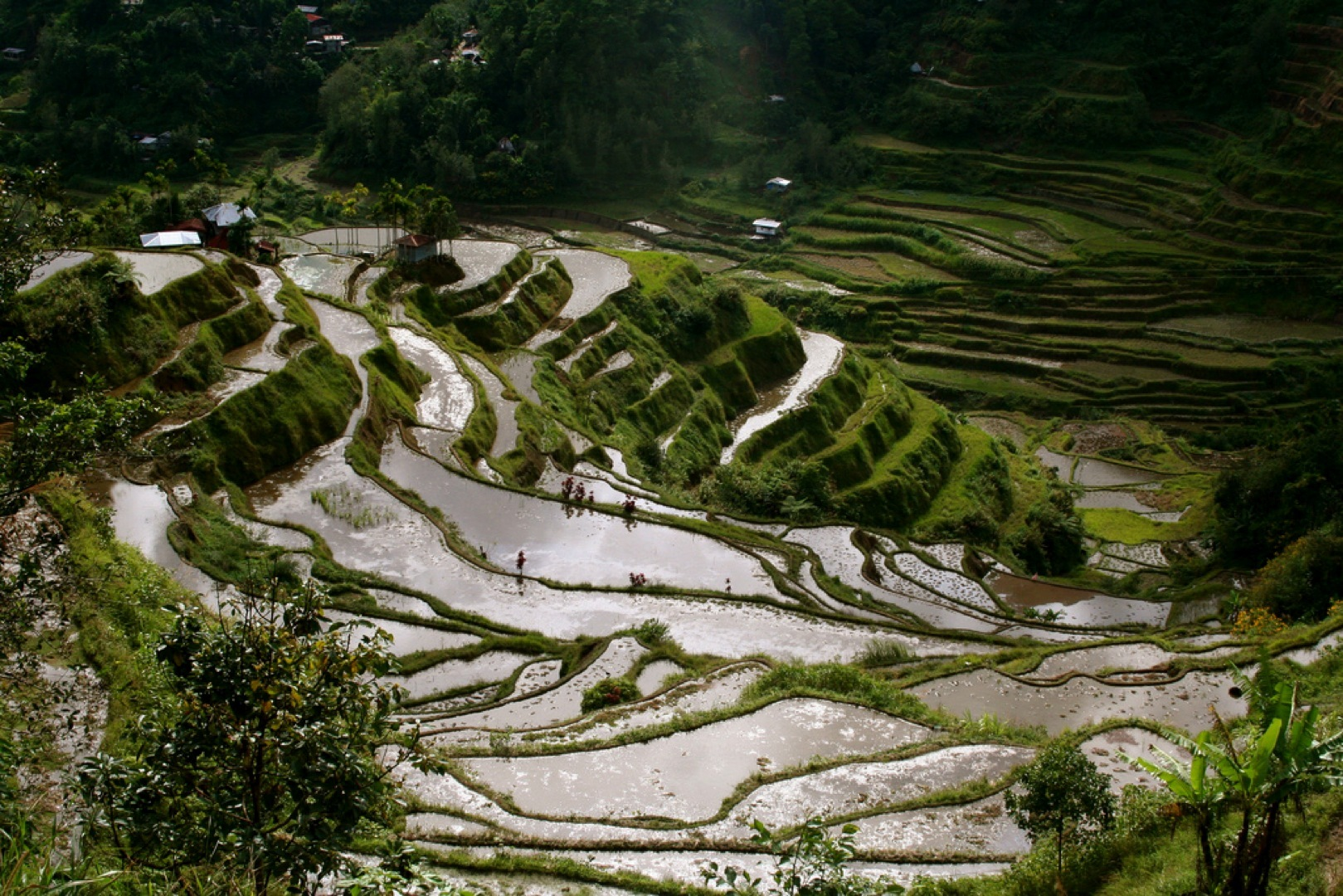 Banaue Rice Terraces by jonrawlinson on flickr