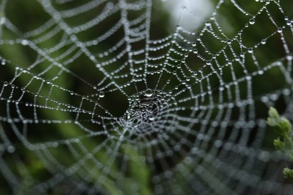 spider web wet with dew