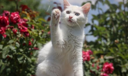 New York state just made it illegal to declaw cats