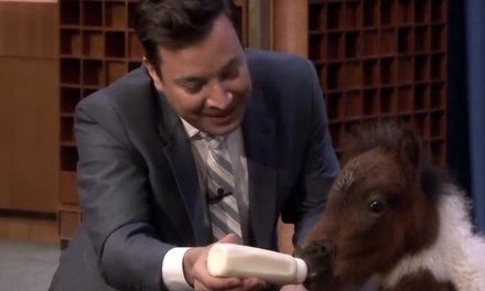 PETA complains animals on 'Tonight Show' are 'passed around like props' — and NYC health officials are investigating