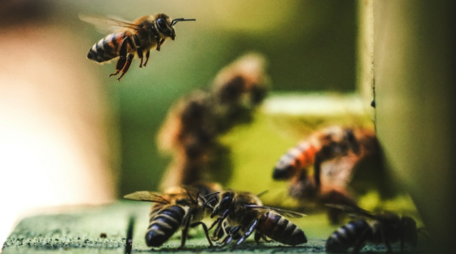 humans are like bees they need to communicate to survive