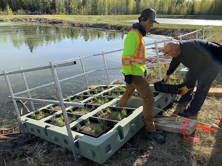 Constructed Floating Wetlands, Drayton, Alberta