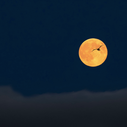 10 things to know about Sunday's supermoon lunar eclipse