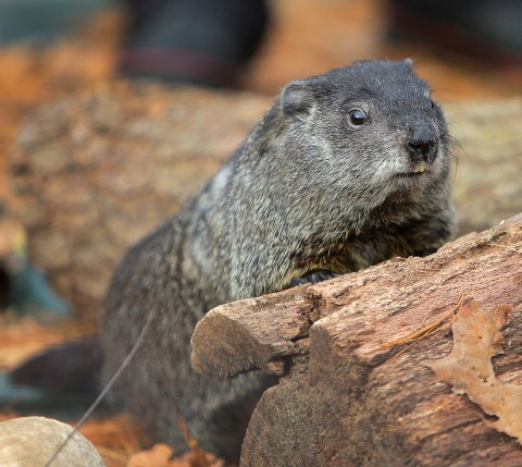 5 steps to avoid living a Groundhog Day in your finances