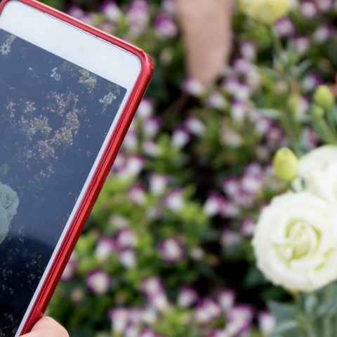 How to Send Photos and Videos That Aren't Blurry