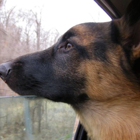 Safety tips for traveling with your pets over Labor Day weekend
