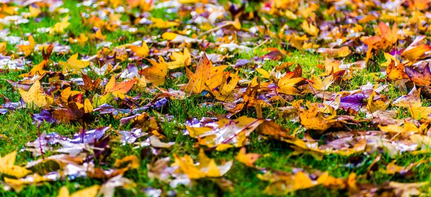 Use this money-saving trick to remove dead leaves from your yard