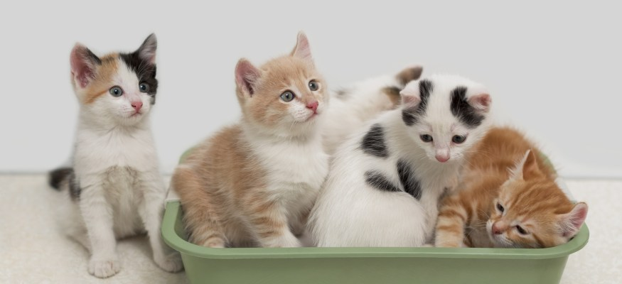 10 ways to save money on cat litter