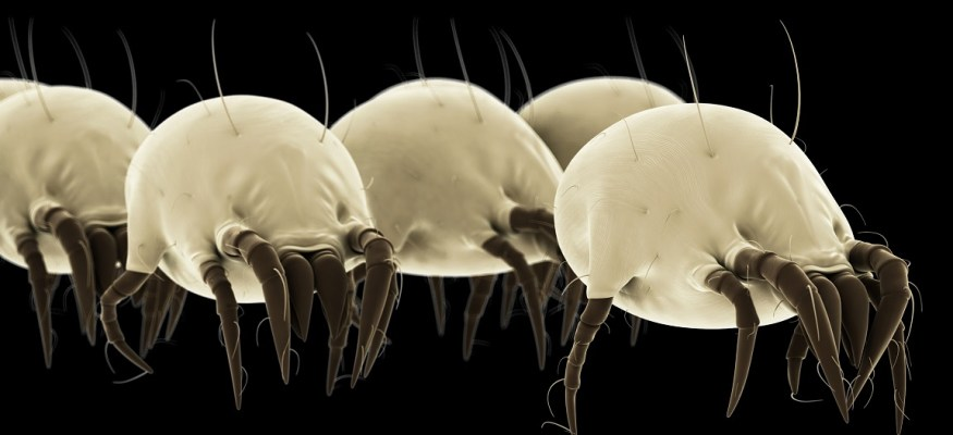 3 places where dangerous dust mites are hiding in your house