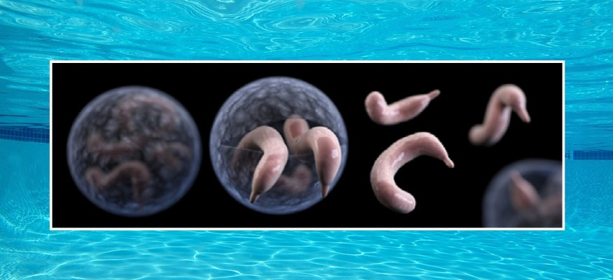 CDC warning: Alarming rise in outbreaks of parasitic infection linked to swimming pools