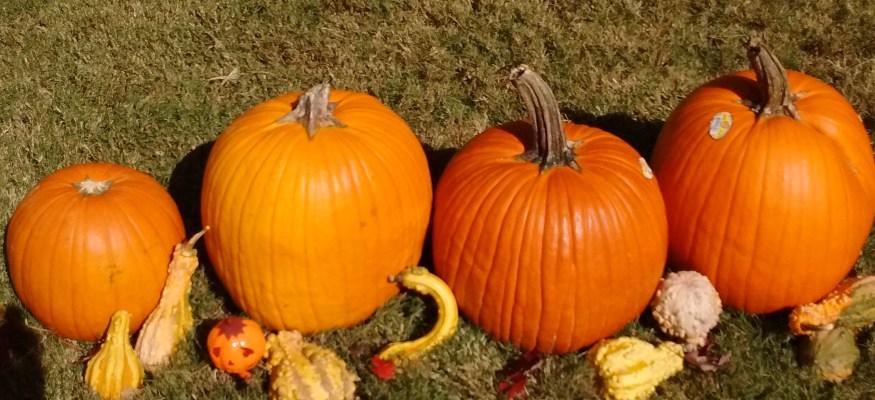 Aldi pumpkins