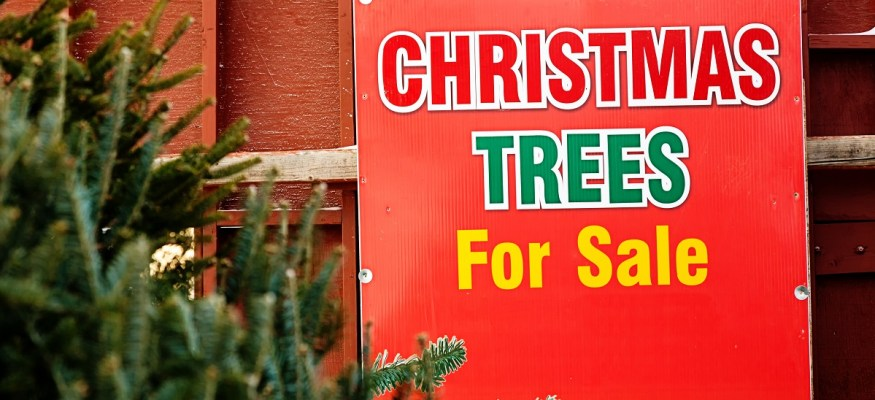 Why your Christmas tree may cost more this year