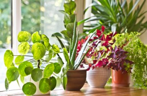 House plants on the porch of a home