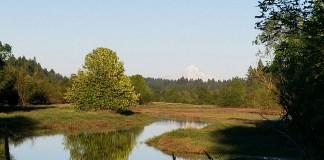 salmon creek greenway