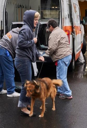 Humane Society of Southwest Washington Florida Dogs
